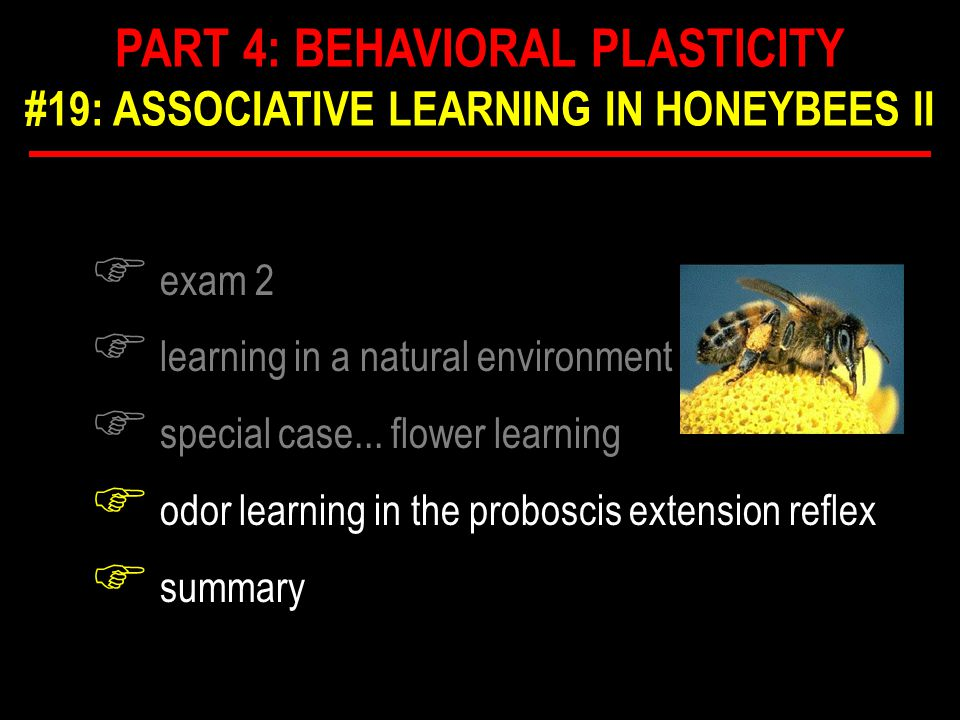 F acquisition function determination in PER F how fast do bees learn.