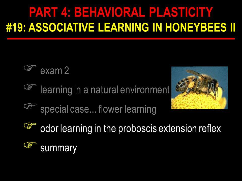 F honeybee brain F ~ 10 6 neurons F complex F what neuropiles mediate PER? F CS ANATOMY OF PER
