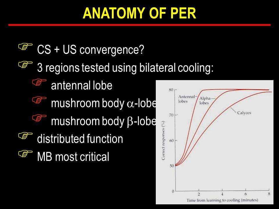 F CS + US convergence.