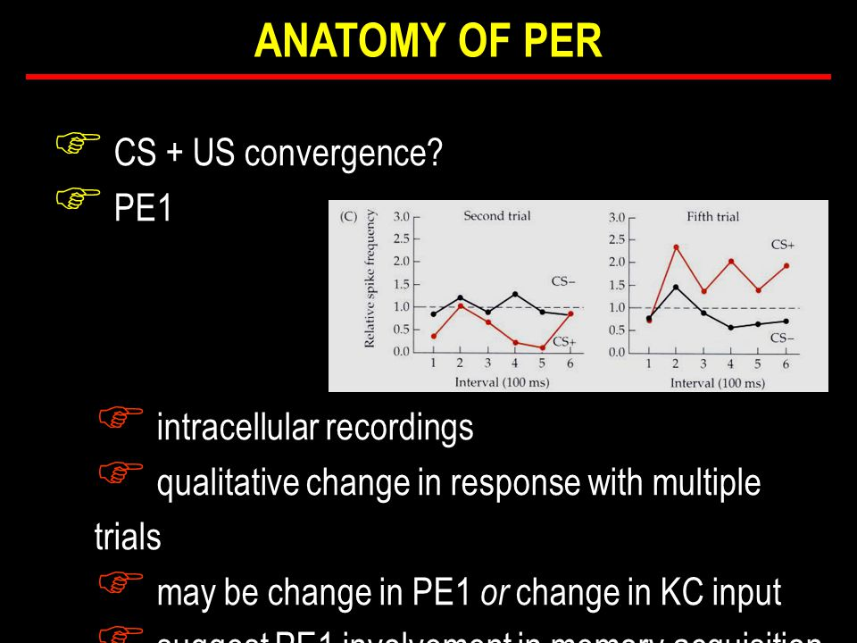 F CS + US convergence? F PE1 F intracellular recordings F qualitative change in response with multiple trials F may be change in PE1 or change in KC i