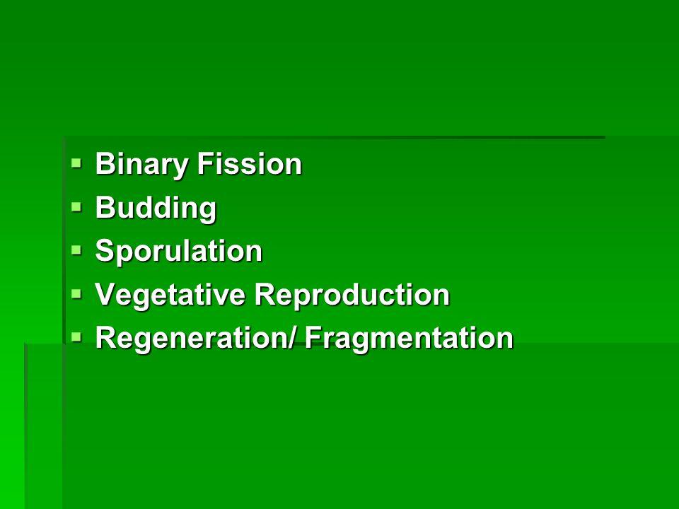  Binary Fission  Budding  Sporulation  Vegetative Reproduction  Regeneration/ Fragmentation