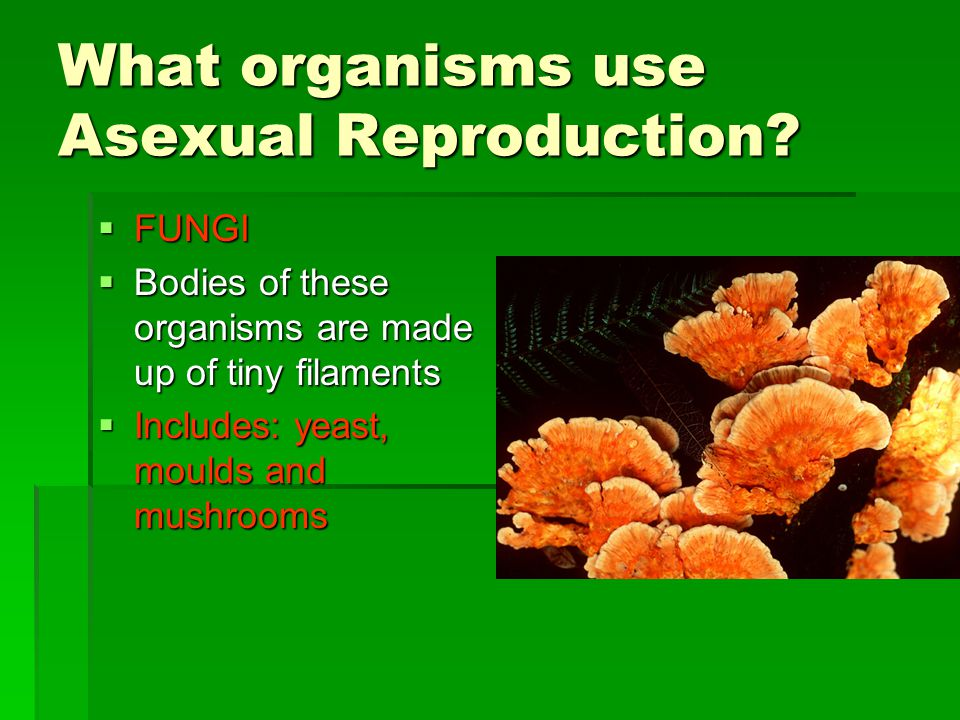 What organisms use Asexual Reproduction.
