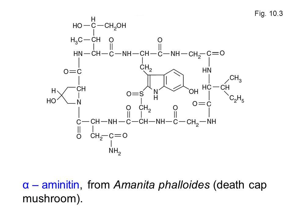 α – aminitin, from Amanita phalloides (death cap mushroom). Fig. 10.3