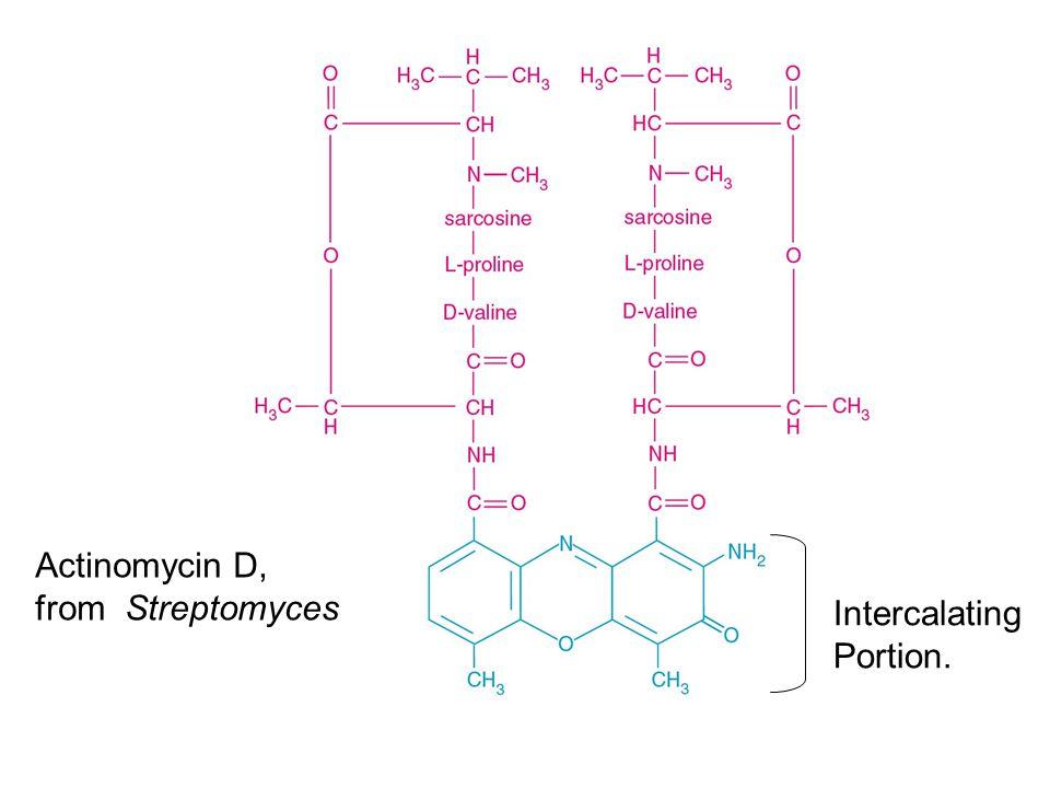 Actinomycin D, from Streptomyces Intercalating Portion.
