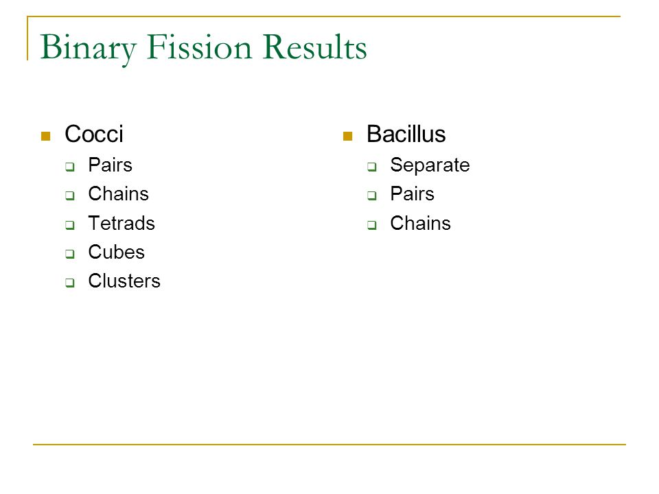 Binary Fission Results Cocci  Pairs  Chains  Tetrads  Cubes  Clusters Bacillus  Separate  Pairs  Chains
