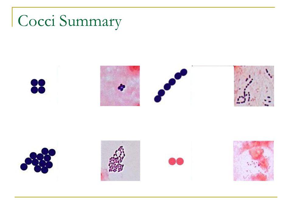 Cocci Summary