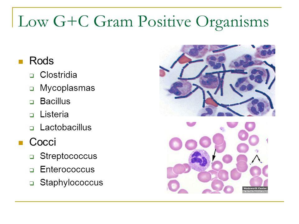 Low G+C Gram Positive Organisms Rods  Clostridia  Mycoplasmas  Bacillus  Listeria  Lactobacillus Cocci  Streptococcus  Enterococcus  Staphyloc