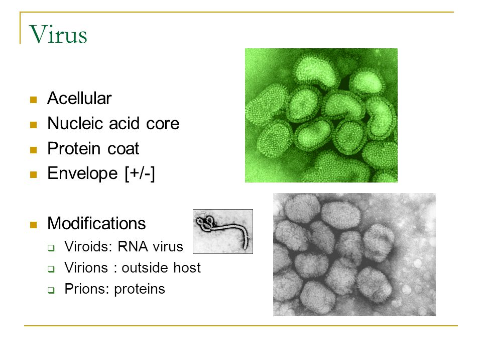 Virus Acellular Nucleic acid core Protein coat Envelope [+/-] Modifications  Viroids: RNA virus  Virions : outside host  Prions: proteins