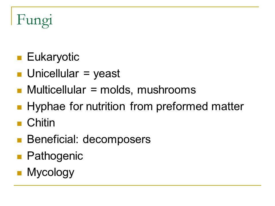 Fungi Eukaryotic Unicellular = yeast Multicellular = molds, mushrooms Hyphae for nutrition from preformed matter Chitin Beneficial: decomposers Pathogenic Mycology