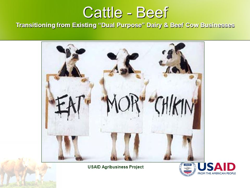 "USAID Agribusiness Project Cattle - Beef Transitioning from Existing ""Dual Purpose"" Dairy & Beef Cow Businesses"