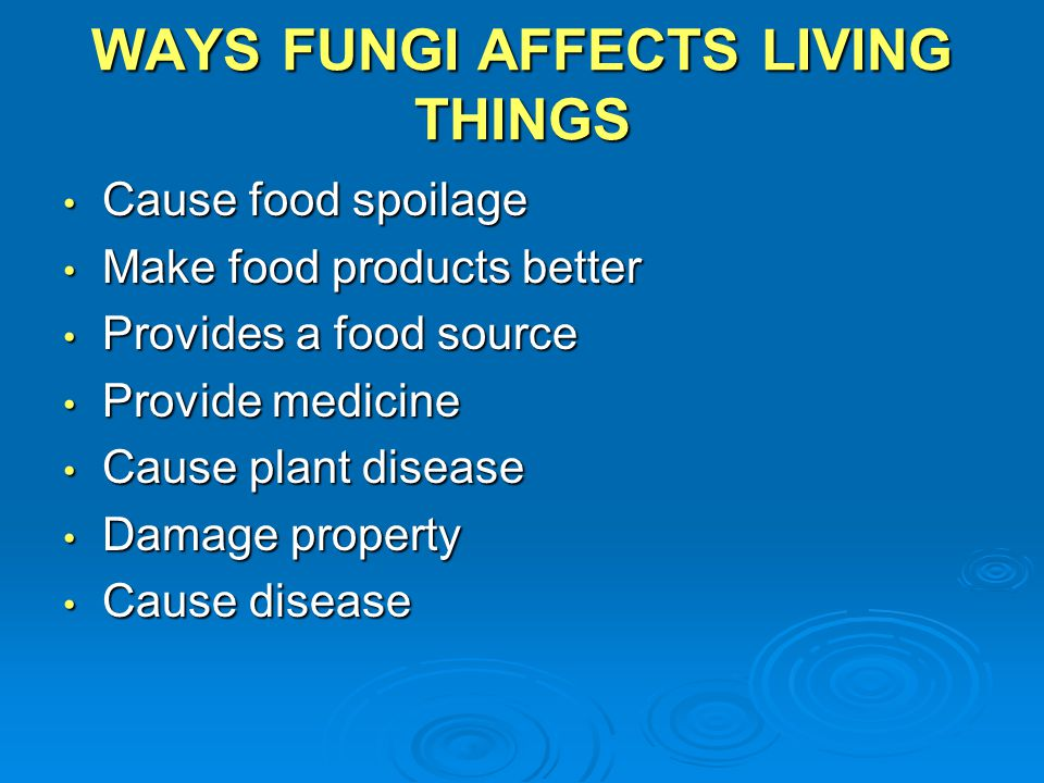 WAYS FUNGI AFFECTS LIVING THINGS Cause food spoilage Cause food spoilage Make food products better Make food products better Provides a food source Pr