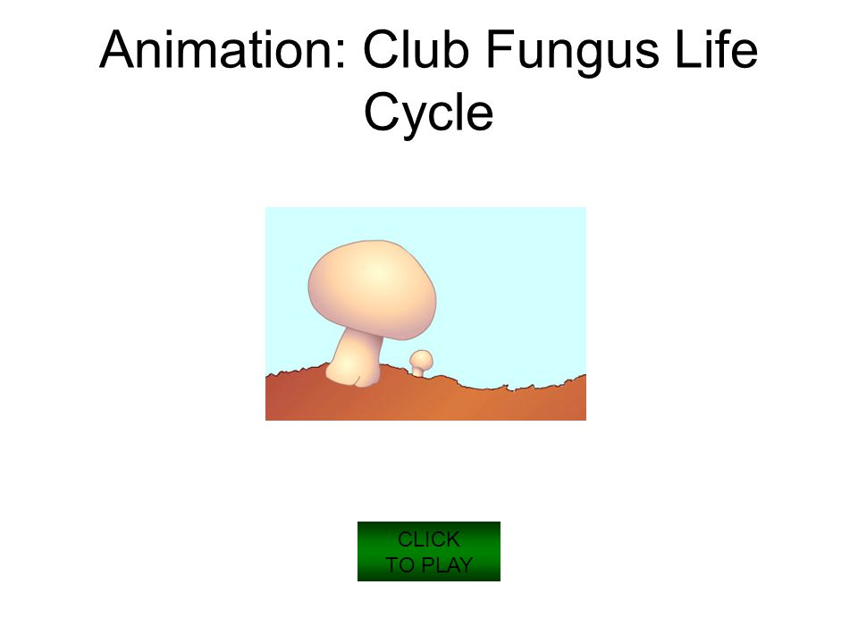 CLICK TO PLAY Animation: Club Fungus Life Cycle