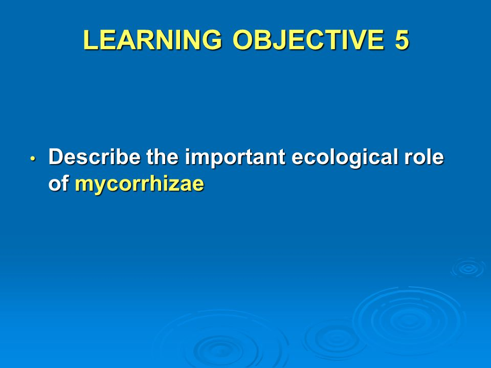 LEARNING OBJECTIVE 5 Describe the important ecological role of mycorrhizae Describe the important ecological role of mycorrhizae