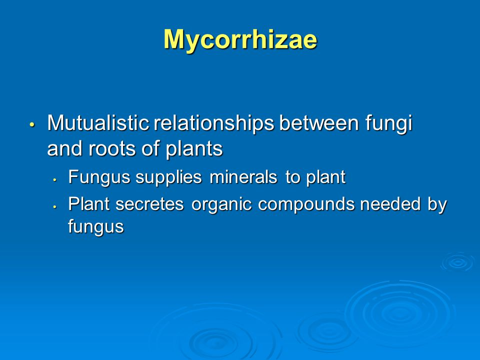 Mycorrhizae Mutualistic relationships between fungi and roots of plants Mutualistic relationships between fungi and roots of plants Fungus supplies mi