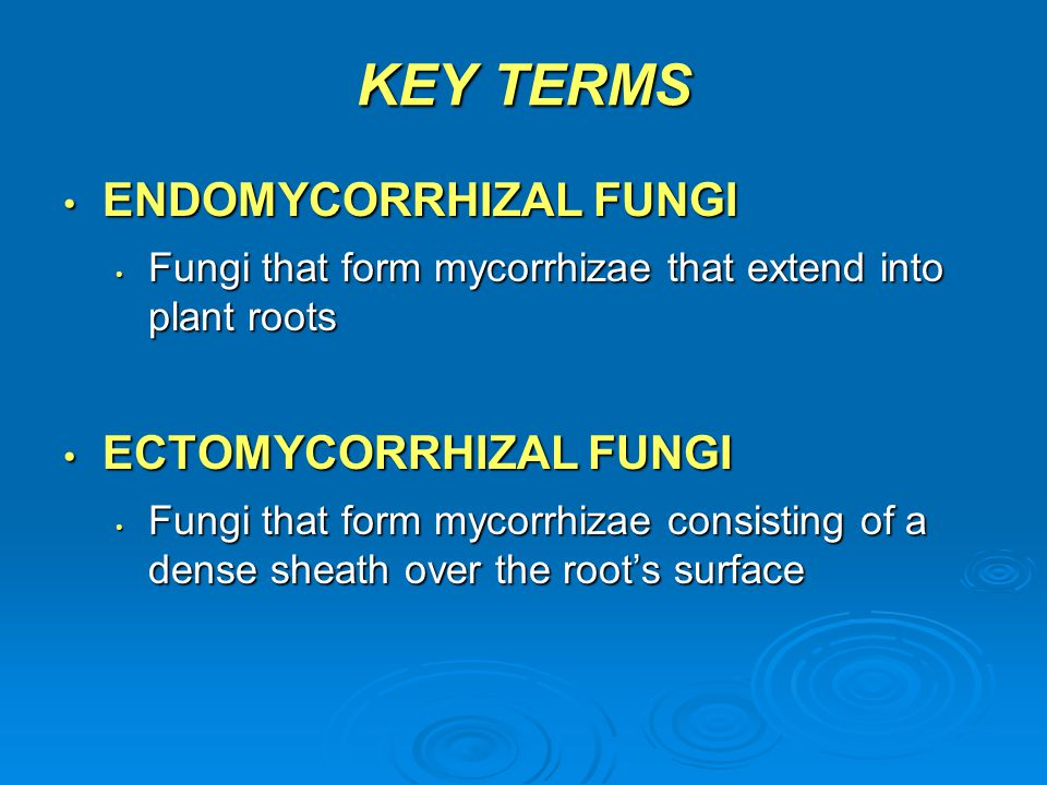 KEY TERMS ENDOMYCORRHIZAL FUNGI ENDOMYCORRHIZAL FUNGI Fungi that form mycorrhizae that extend into plant roots Fungi that form mycorrhizae that extend