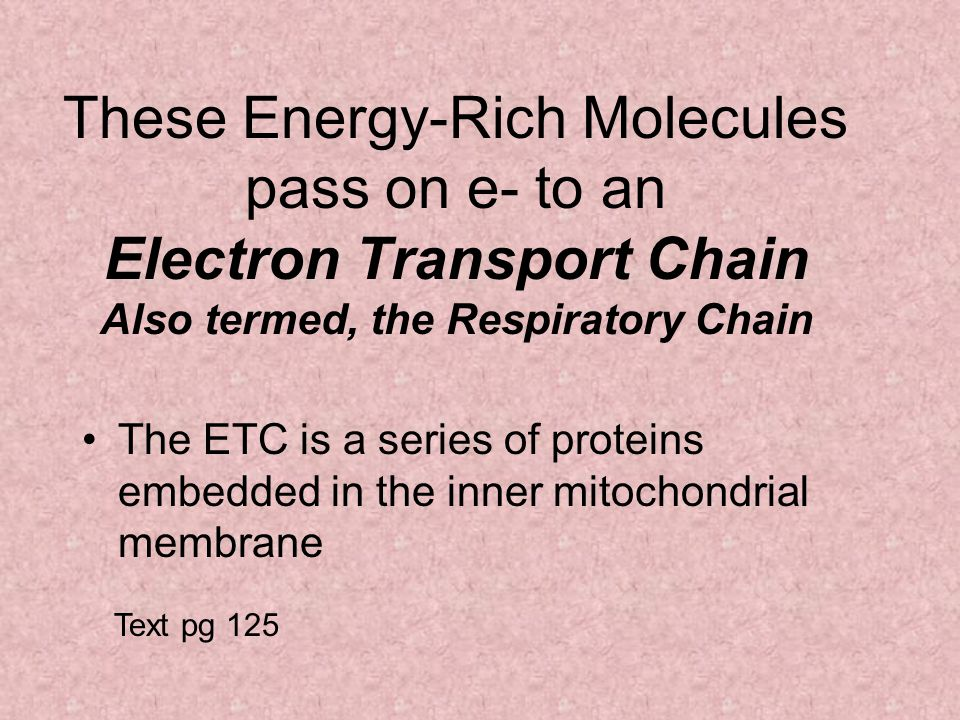 These Energy-Rich Molecules pass on e- to an Electron Transport Chain Also termed, the Respiratory Chain The ETC is a series of proteins embedded in the inner mitochondrial membrane Text pg 125