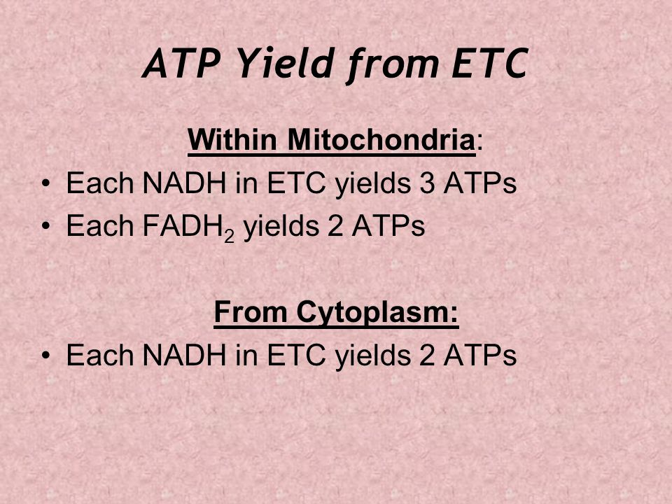 ATP Yield from ETC Within Mitochondria: Each NADH in ETC yields 3 ATPs Each FADH 2 yields 2 ATPs From Cytoplasm: Each NADH in ETC yields 2 ATPs