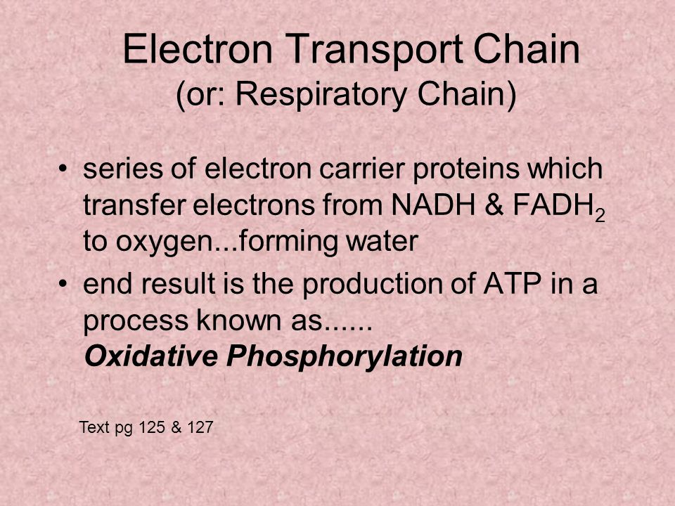 Electron Transport Chain (or: Respiratory Chain) series of electron carrier proteins which transfer electrons from NADH & FADH 2 to oxygen...forming water end result is the production of ATP in a process known as......