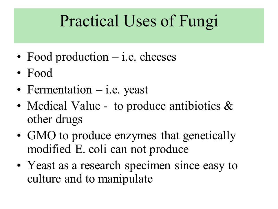 Practical Uses of Fungi Food production – i.e. cheeses Food Fermentation – i.e. yeast Medical Value - to produce antibiotics & other drugs GMO to prod