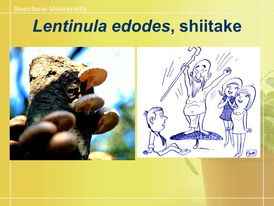Lentinula edodes, shiitake