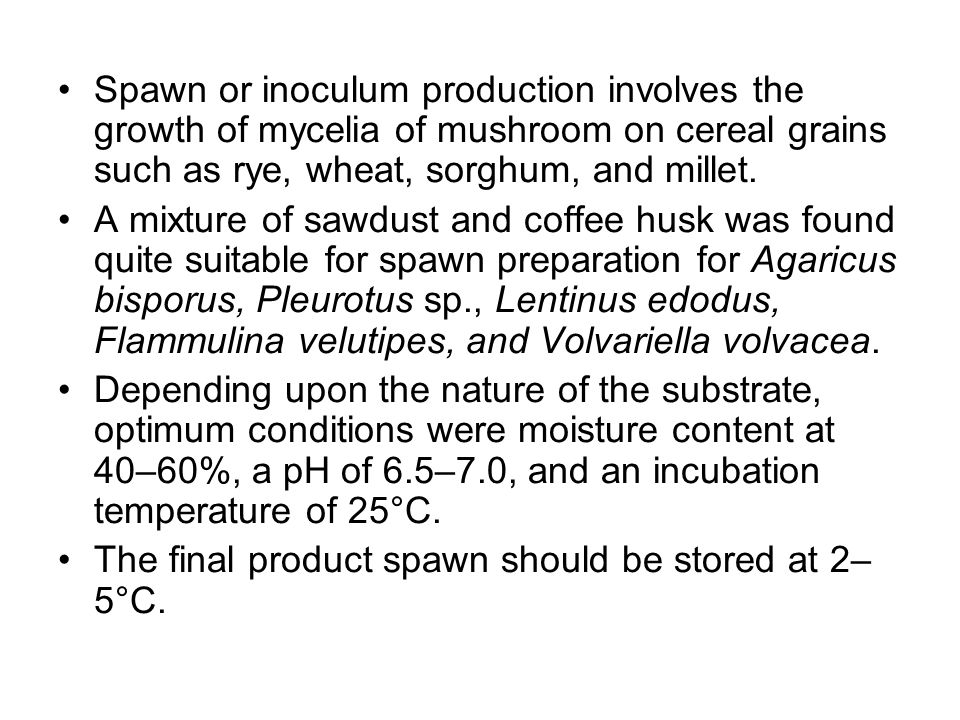 Spawn or inoculum production involves the growth of mycelia of mushroom on cereal grains such as rye, wheat, sorghum, and millet. A mixture of sawdust