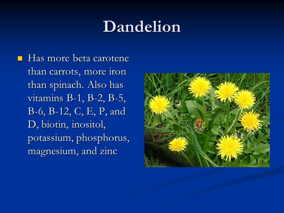 Dandelion Has more beta carotene than carrots, more iron than spinach. Also has vitamins B-1, B-2, B-5, B-6, B-12, C, E, P, and D, biotin, inositol, p