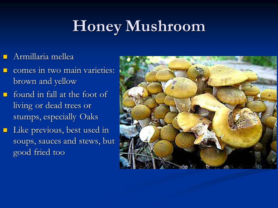 Honey Mushroom Armillaria mellea Armillaria mellea comes in two main varieties: brown and yellow comes in two main varieties: brown and yellow found i