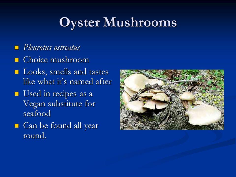 Oyster Mushrooms Pleurotus ostreatus Pleurotus ostreatus Choice mushroom Choice mushroom Looks, smells and tastes like what it's named after Looks, sm