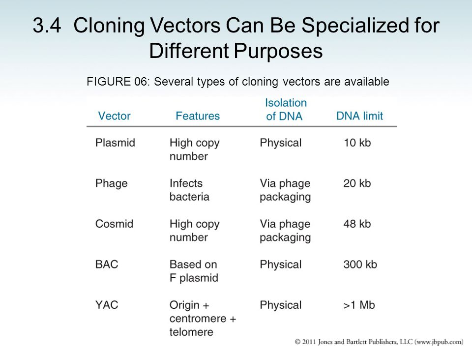 3.4 Cloning Vectors Can Be Specialized for Different Purposes FIGURE 06: Several types of cloning vectors are available