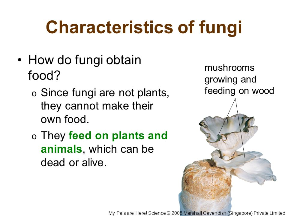 Characteristics of fungi How do fungi obtain food.