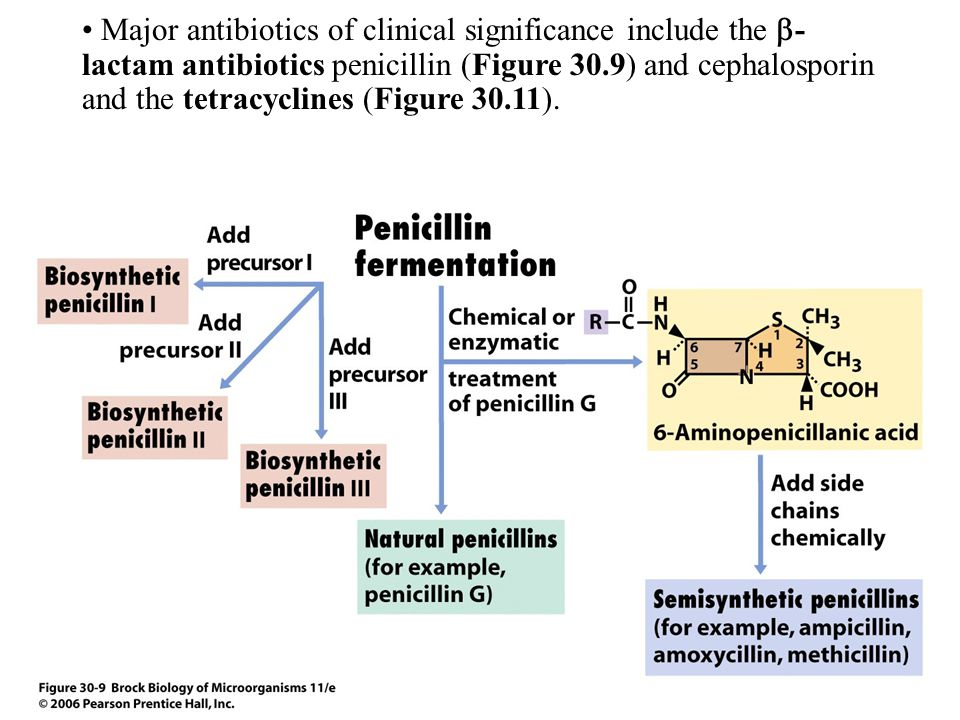 Major antibiotics of clinical significance include the  - lactam antibiotics penicillin (Figure 30.9) and cephalosporin and the tetracyclines (Figure 30.11).