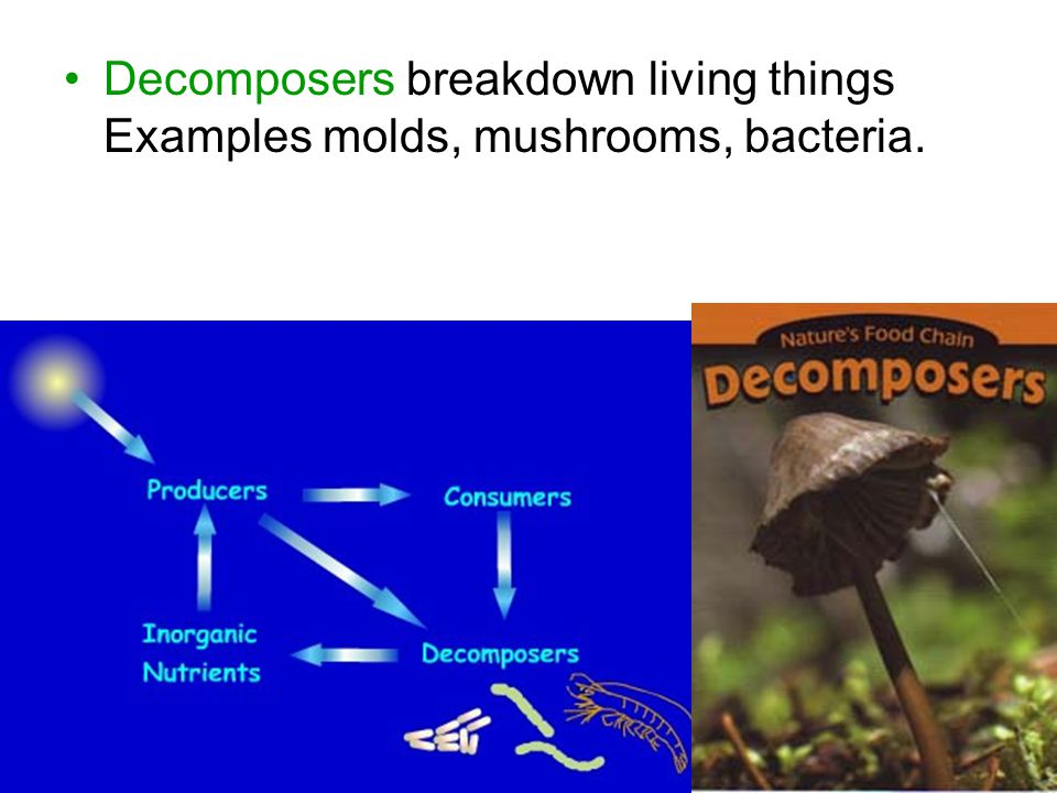Chapter 30.3 Notes Food Chain is a pathway of energy and materials through a community.