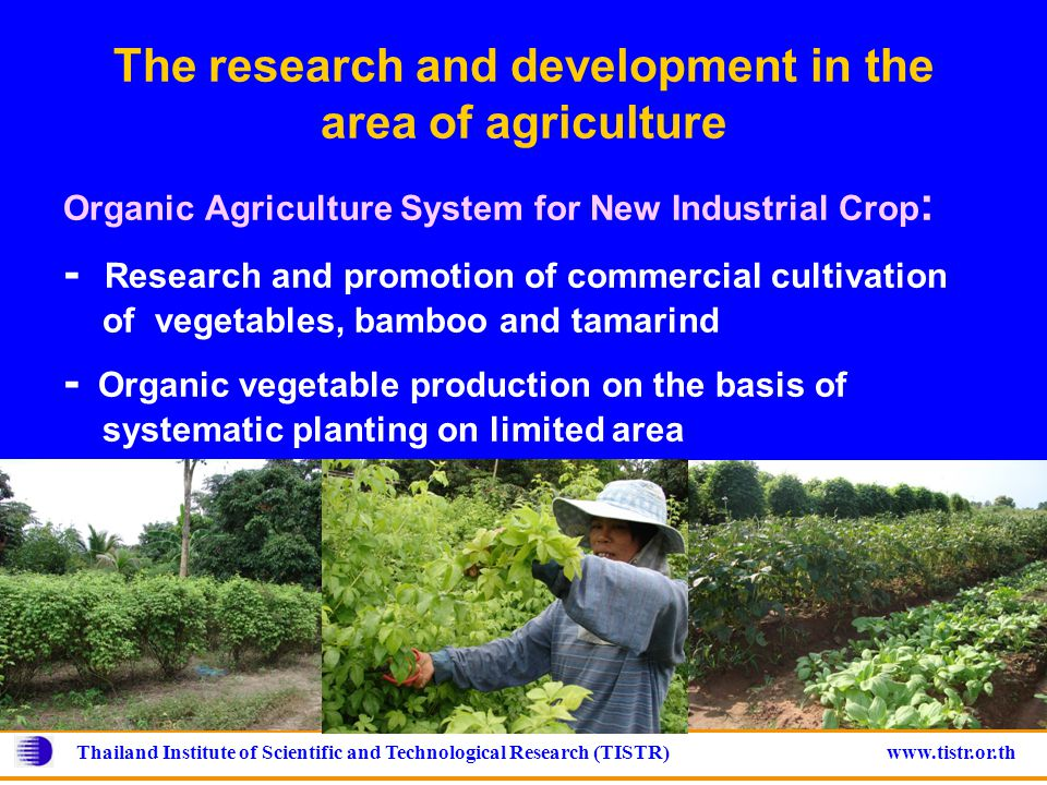 Thailand Institute of Scientific and Technological Research (TISTR) www.tistr.or.th The research and development in the area of agriculture Organic Agriculture System for New Industrial Crop : - Research and promotion of commercial cultivation of vegetables, bamboo and tamarind - Organic vegetable production on the basis of systematic planting on limited area