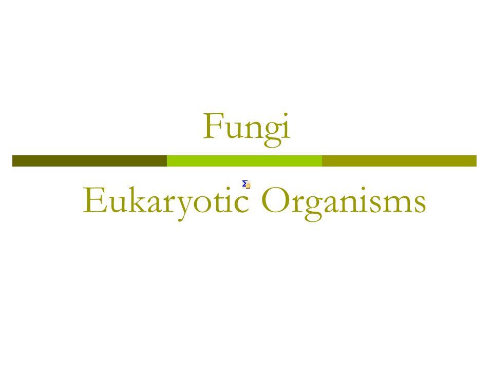 Fungi Eukaryotic Organisms