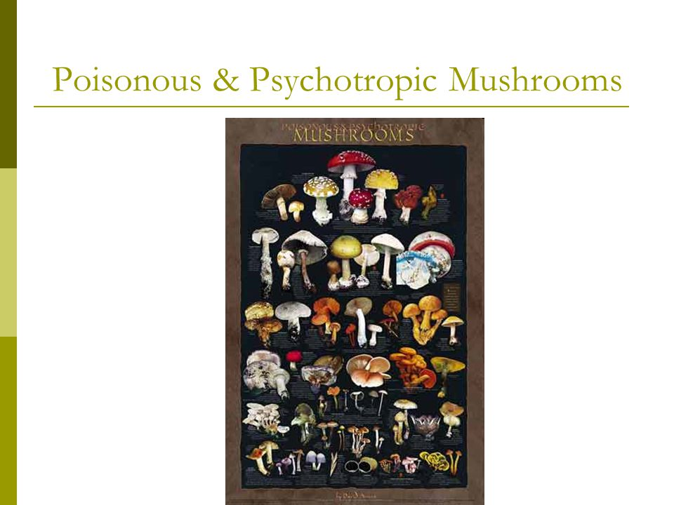 Poisonous & Psychotropic Mushrooms