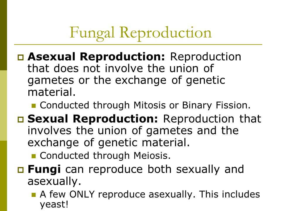 Fungal Reproduction  Asexual Reproduction: Reproduction that does not involve the union of gametes or the exchange of genetic material.