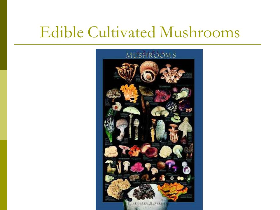 Edible Cultivated Mushrooms