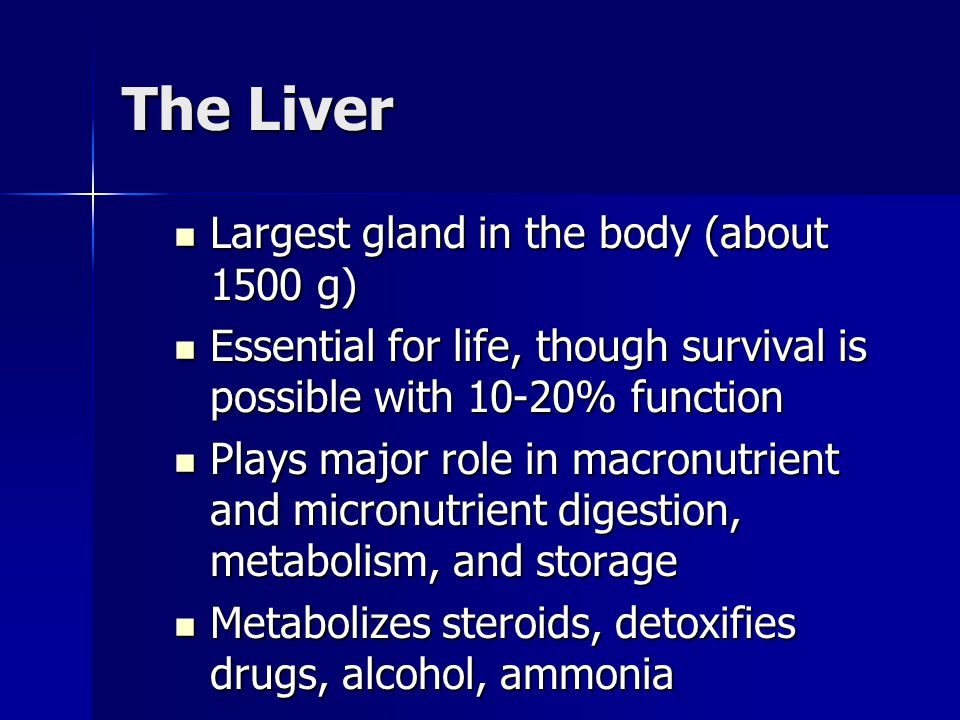 The Liver Largest gland in the body (about 1500 g) Largest gland in the body (about 1500 g) Essential for life, though survival is possible with 10-20