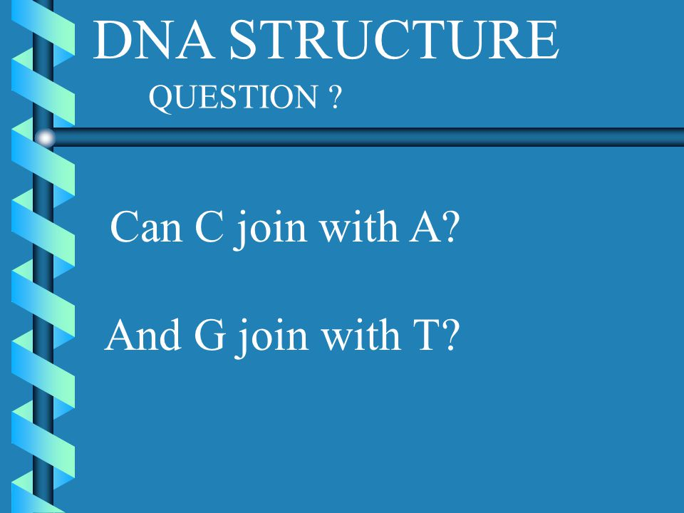 DNA STRUCTURE QUESTION ? Can C join with A? And G join with T?