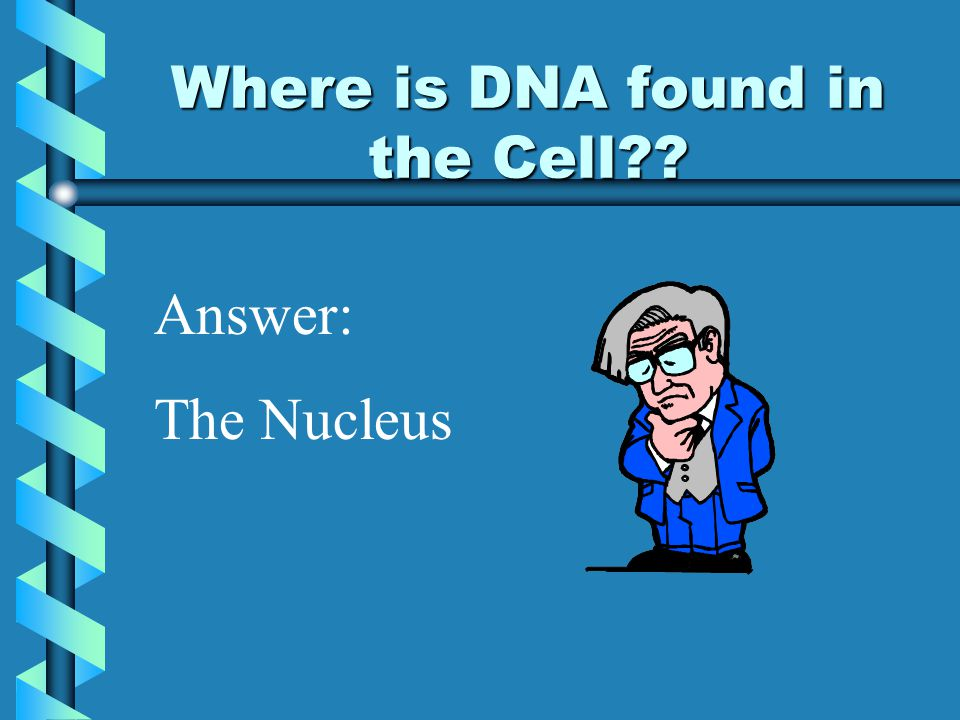 Where is DNA found in the Cell?? Answer: The Nucleus