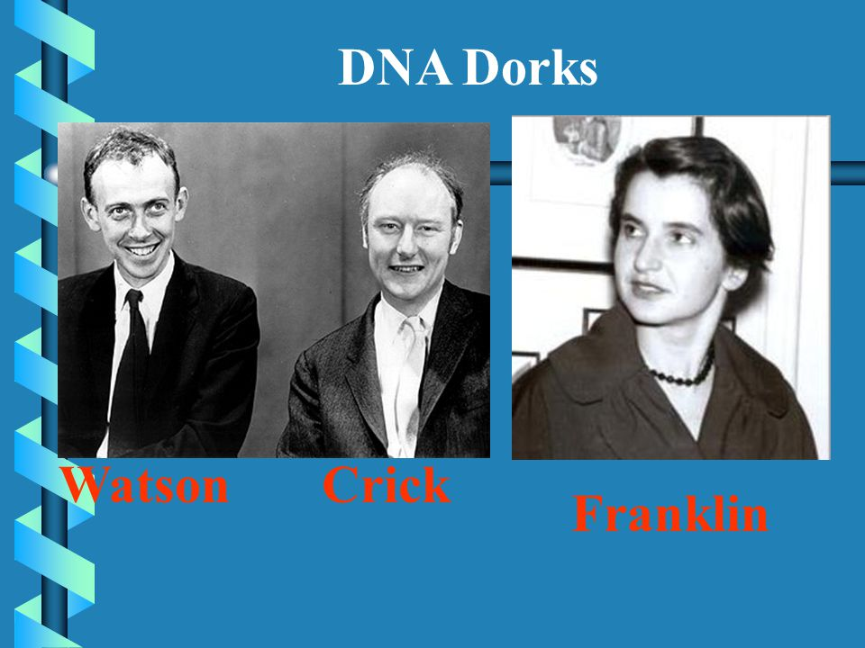 WatsonCrick Franklin DNA Dorks