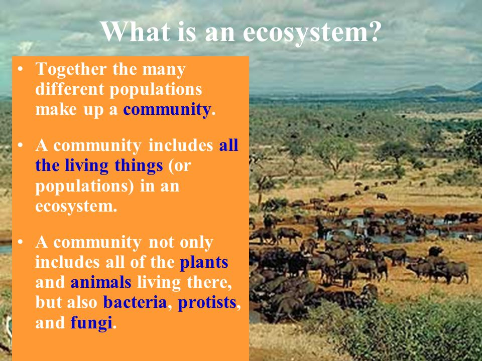 What is an ecosystem? Together the many different populations make up a community. A community includes all the living things (or populations) in an e