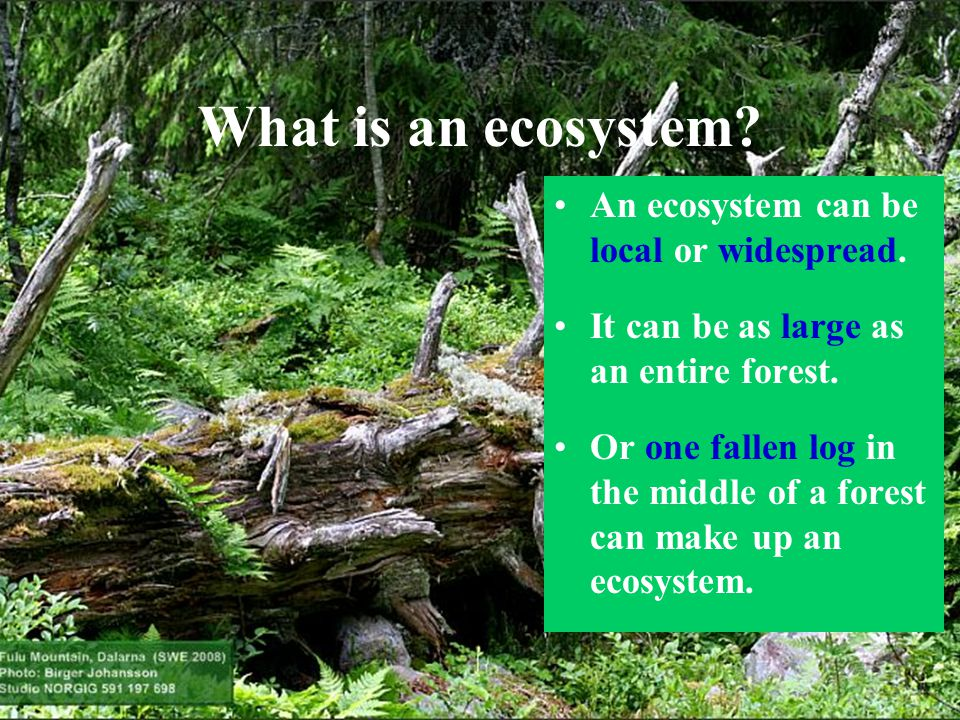 What is an ecosystem? An ecosystem can be local or widespread. It can be as large as an entire forest. Or one fallen log in the middle of a forest can