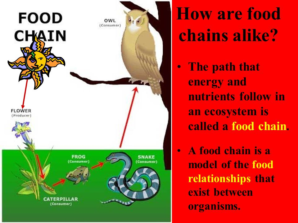 How are food chains alike? The path that energy and nutrients follow in an ecosystem is called a food chain. A food chain is a model of the food relat