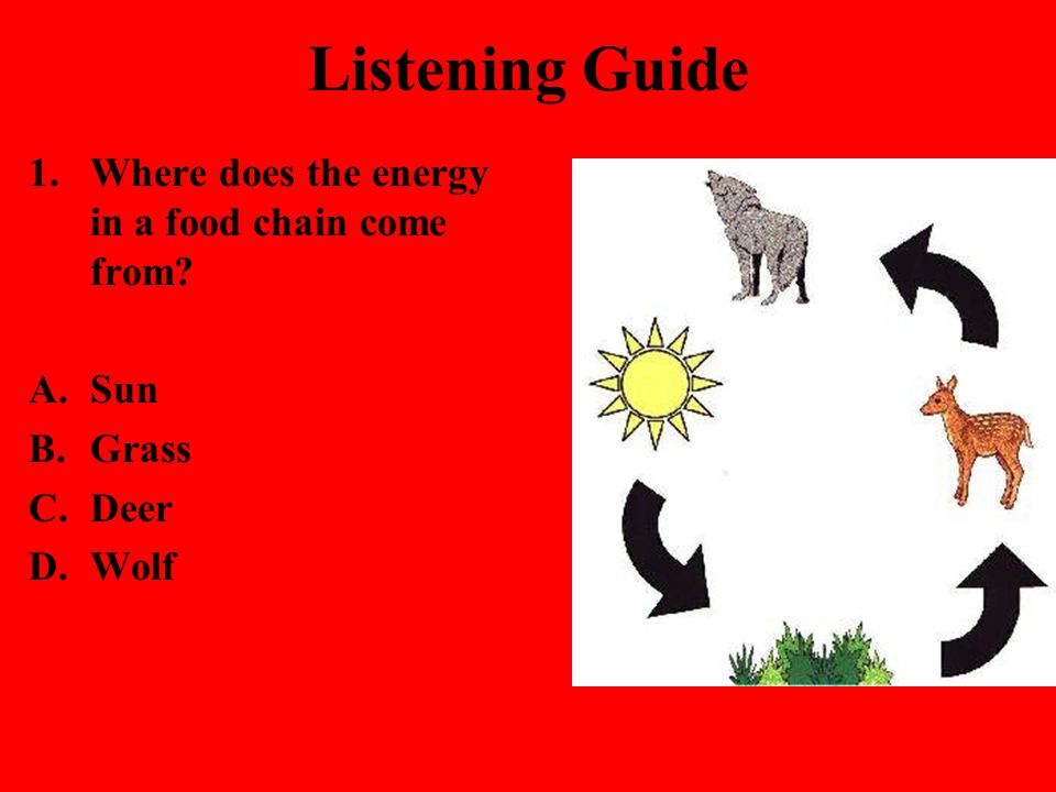 Listening Guide 1.Where does the energy in a food chain come from? A.Sun B.Grass C.Deer D.Wolf