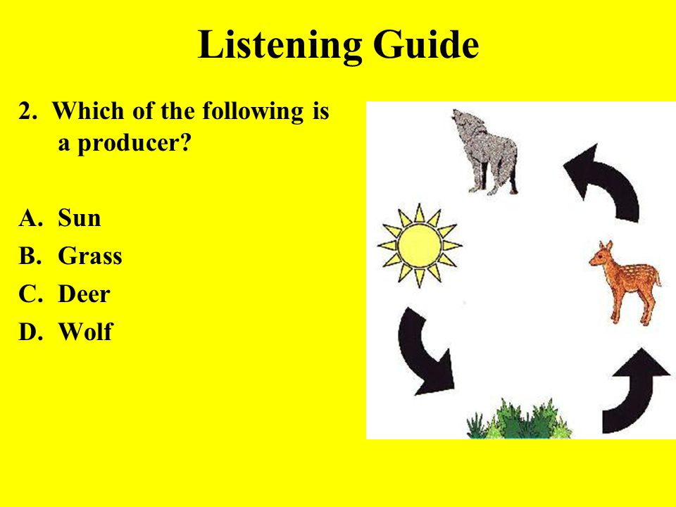 Listening Guide 2. Which of the following is a producer? A.Sun B.Grass C.Deer D.Wolf