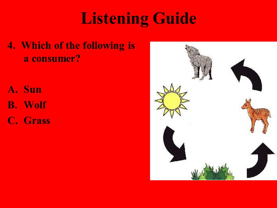 Listening Guide 4. Which of the following is a consumer? A.Sun B.Wolf C.Grass