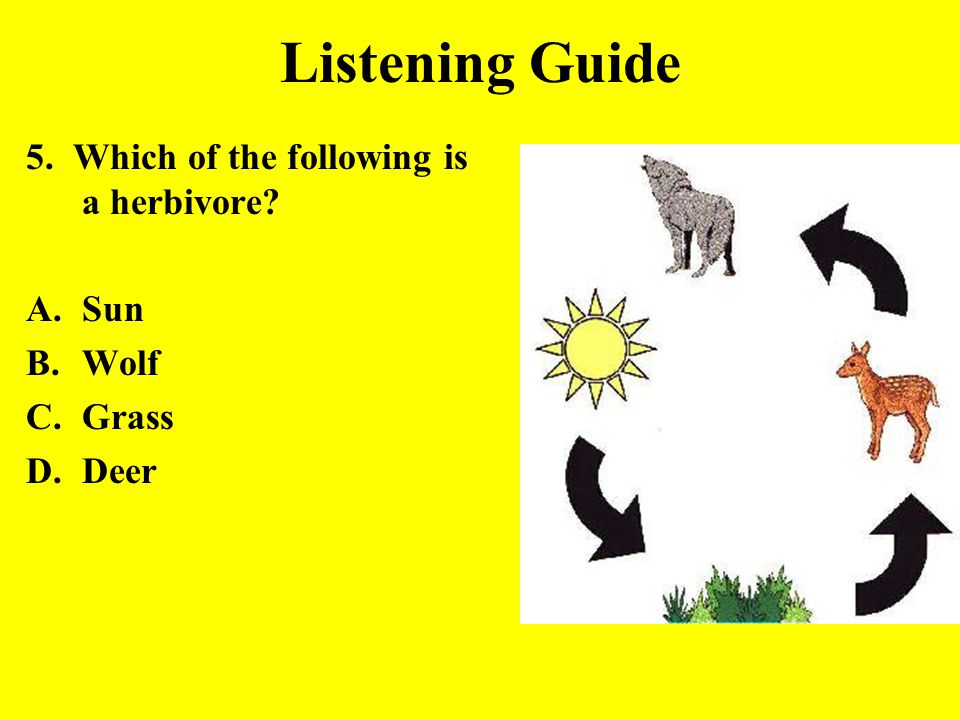 Listening Guide 5. Which of the following is a herbivore? A.Sun B.Wolf C.Grass D.Deer