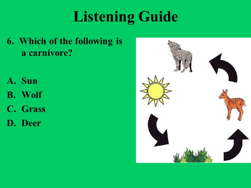 Listening Guide 6. Which of the following is a carnivore? A.Sun B.Wolf C.Grass D.Deer