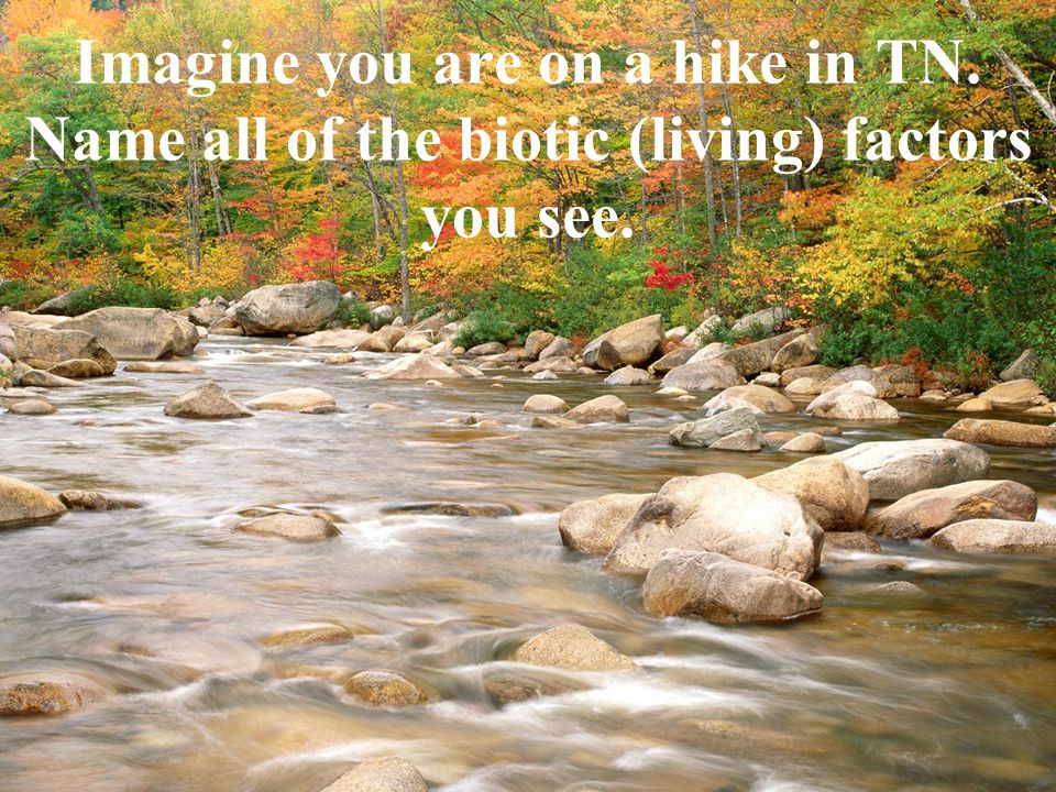 Imagine you are on a hike in TN. Name all of the biotic (living) factors you see.